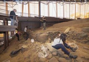 Excavación II Campus-5.jpg