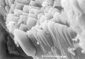 Empalizada de cristales de dolomita